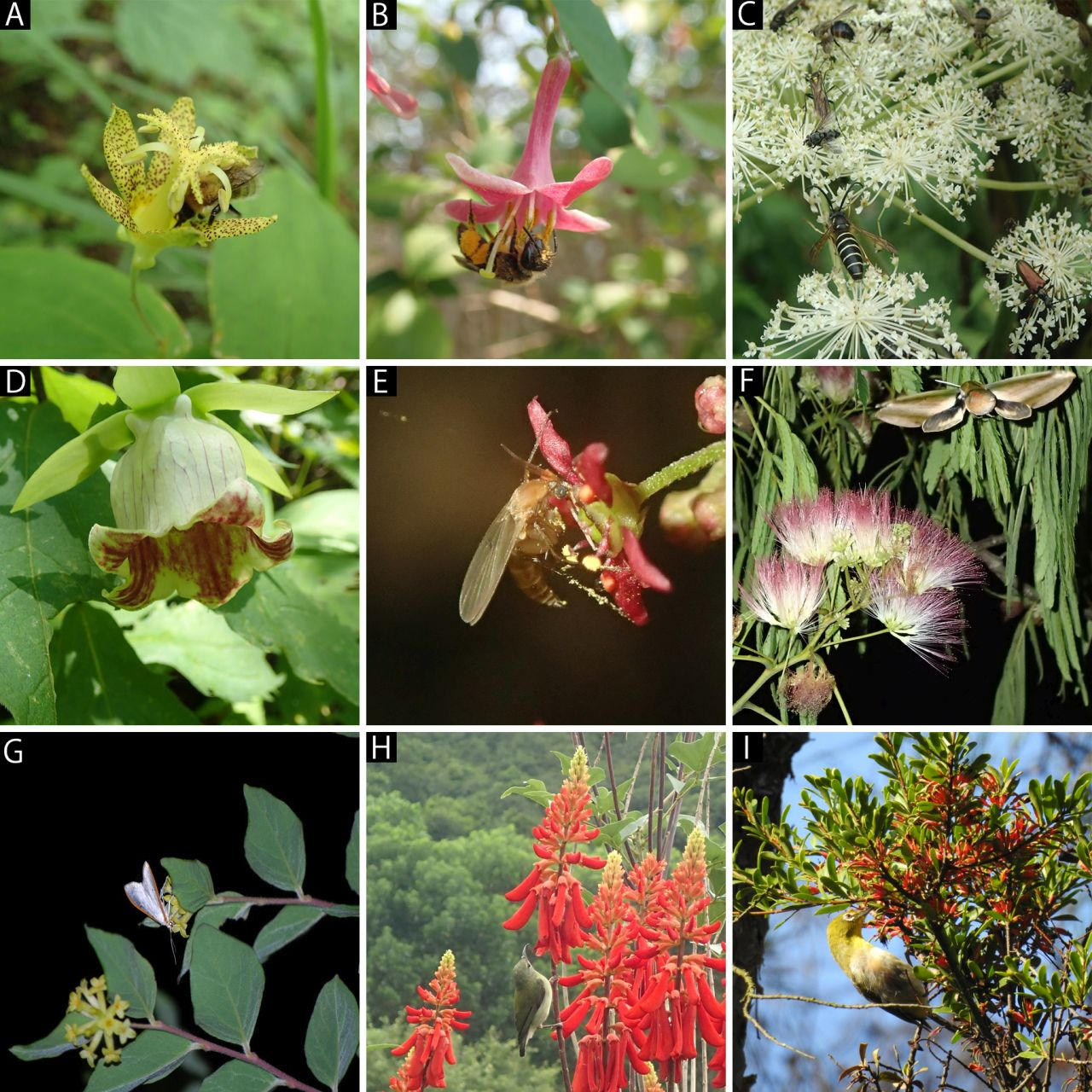 Representatives of flowers and pollinators in East Asia.